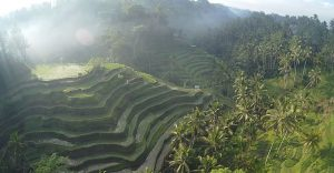 tegallalang rice terrace 1 1